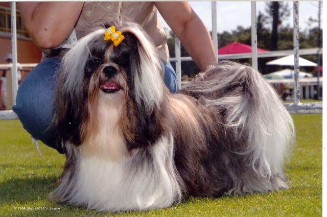 Les chiens de salon forum fr - Chien de salon photos ...